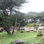 Gorilla Enclosure 15