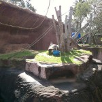 Gorilla Enclosure 17