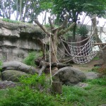 Gorilla Enclosure 21