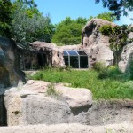 Gorilla Enclosure 23
