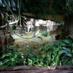 Gorilla Enclosure 29