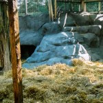 Gorilla Enclosure 3