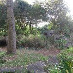 Gorilla Enclosure 4