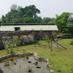 Gorilla Enclosure 6