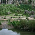 Is this the gorilla enclosure or the duck enclosure?